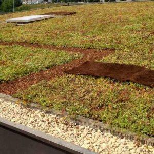vegetalisation-toiture-terrasse-grenoble